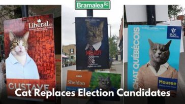 Hoardings Of Election Candidates Replaced With Cat Pictures In Montreal, See Netizens Reaction